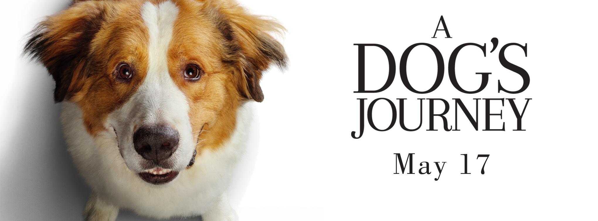 Slider image for A Dog's Journey