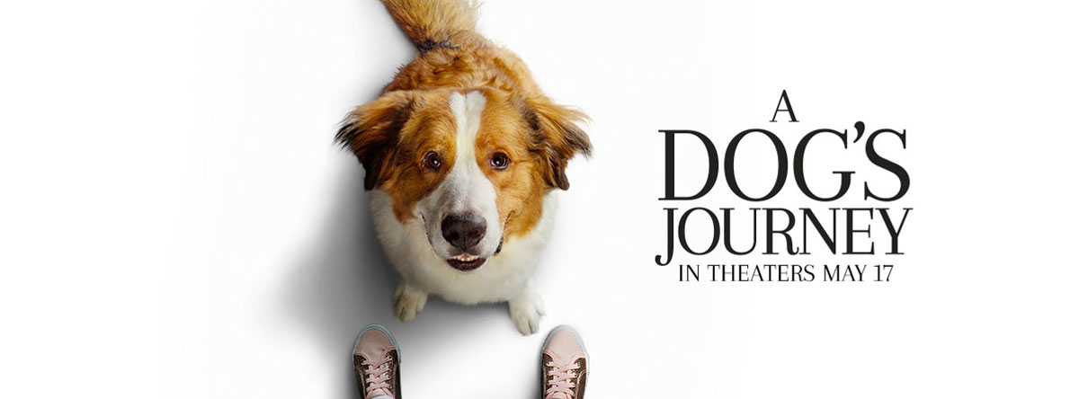 Dogs-Journey-A-Trailer-and-Info
