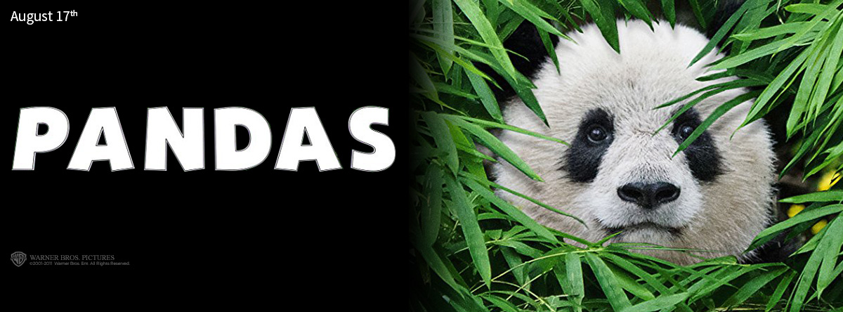 Pandas-An-IMAX-3D-Experience-Trailer-and-Info