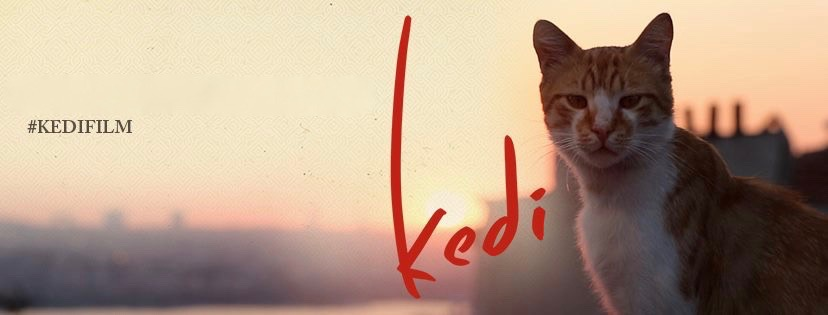 Kedi-Trailer-and-Info