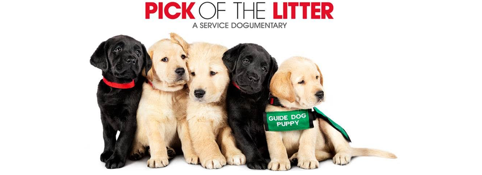 Pick-of-the-Litter