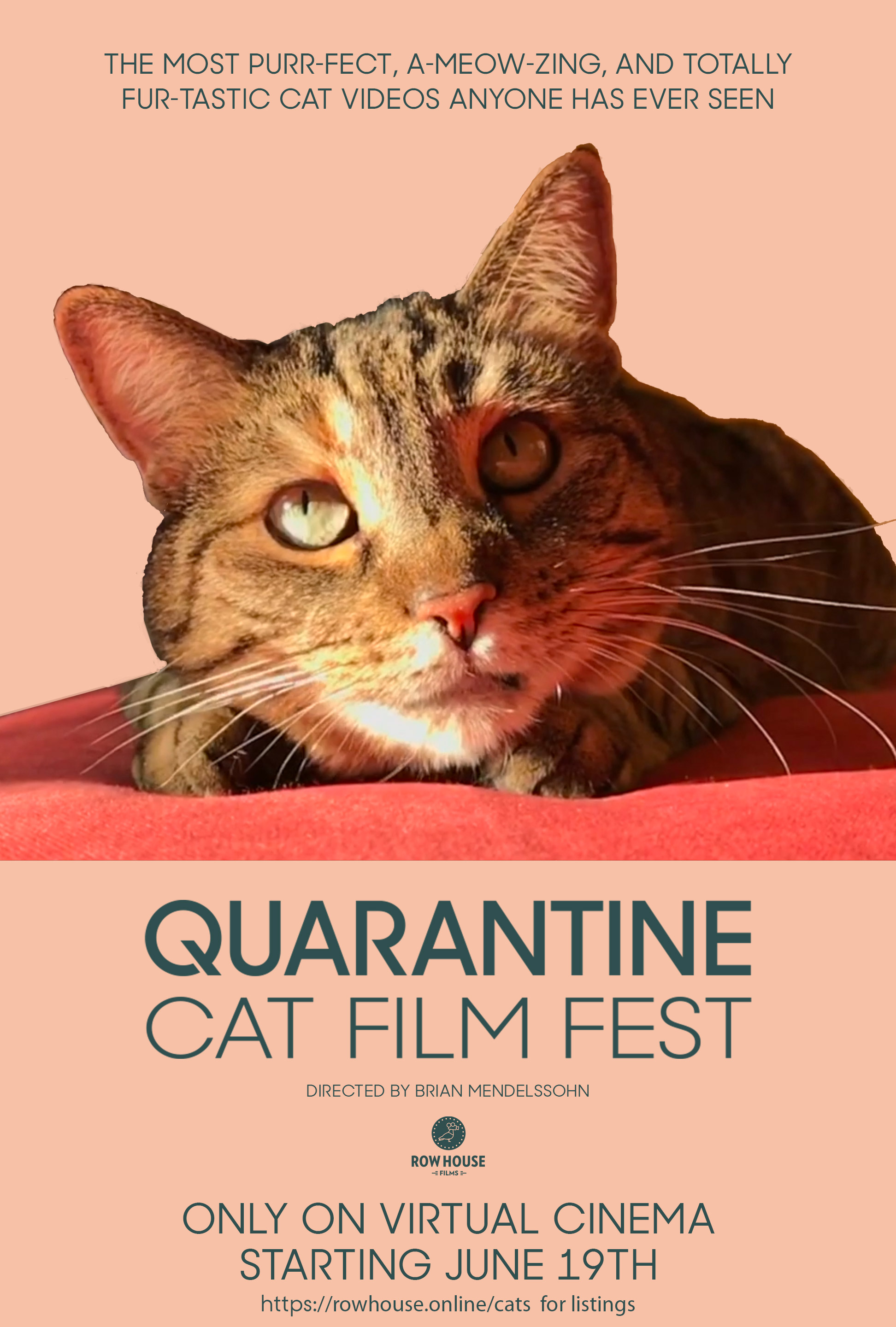 Quarantine Cat Film Festival Poster